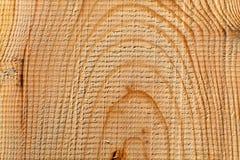 Textura de madera del árbol cortado Imagen de archivo