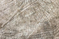 Textura de madera del árbol cortado Fotos de archivo libres de regalías