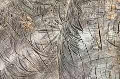 Textura de madera del árbol cortado Foto de archivo
