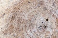 Textura de madera del árbol cortado Imagen de archivo libre de regalías