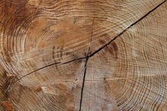 Textura de madera del árbol cortado Fotos de archivo