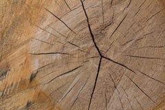 Textura de madera del árbol cortado Imagenes de archivo