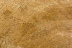 Textura de madera del árbol cortado Foto de archivo libre de regalías