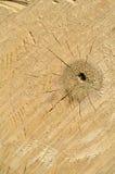 Textura de madera del árbol de Cutted Fotografía de archivo libre de regalías