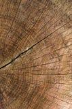 Textura de madera del árbol de Cutted Imagen de archivo