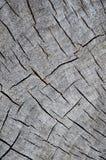 Textura de madera del árbol de Cutted Foto de archivo