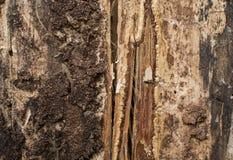 Textura de madera del árbol secado Foto de archivo