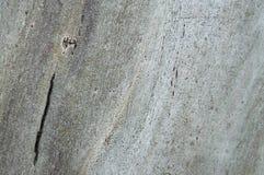 Textura de madera del árbol secado viejo Imagen de archivo libre de regalías