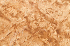 Textura de madera del abedul carelio Imagenes de archivo