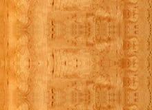 Textura de madera del abedul de Sandy del primer Fotos de archivo libres de regalías