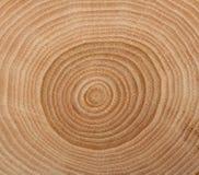 Textura de madera del corte Imagen de archivo