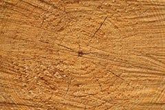 Textura de madera del corte Foto de archivo libre de regalías