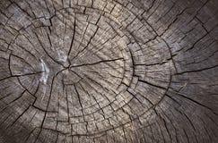 Textura de madera del corte Fotografía de archivo libre de regalías