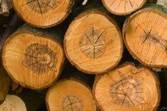 Textura de madera del corte Foto de archivo