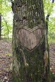 Textura de madera del corte del corazón Fotos de archivo libres de regalías