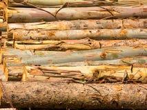 Textura de madera del eucalipto del fuego Fotos de archivo libres de regalías