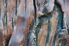 Textura de madera del fondo Imagenes de archivo