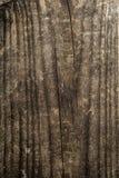 Textura de madera del fondo del grano Fotos de archivo