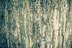 Textura de madera del jati con Java central admitida color blanco y negro foto de archivo libre de regalías