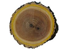 Textura de madera del olmo foto de archivo libre de regalías