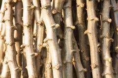 Textura de madera del palillo Imágenes de archivo libres de regalías