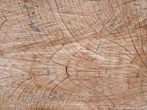 Textura de madera del tocón Imagen de archivo