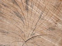 Textura de madera del tocón Imágenes de archivo libres de regalías