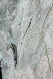 Textura de madera del tocón de árbol seco, fondo Fotografía de archivo