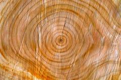 Textura de madera del tronco Imagenes de archivo