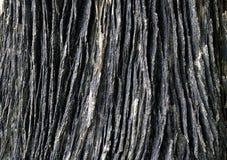 Textura de madera del tronco de árbol Imagenes de archivo