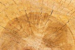 Textura de madera del tronco de árbol cortado foto de archivo libre de regalías