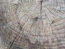Textura de madera del tronco de árbol cortado de pino Fotos de archivo