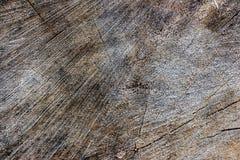 Textura de madera del tronco de árbol cortado, primer 12 Foto de archivo libre de regalías