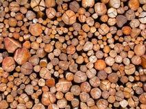 Textura de madera del tronco del fuego Imagenes de archivo