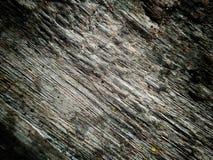 Textura de madera detallada Foto de archivo libre de regalías