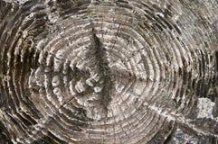 Textura de madera en el tocón viejo Imagenes de archivo
