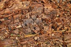 Textura de madera. Es la textura de un arbol\\r\\nalcanzado por un rayo Royalty Free Stock Images