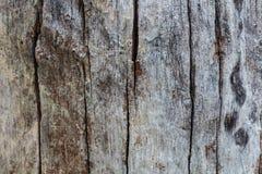 Textura de madera/fondo de madera de la textura Fotografía de archivo