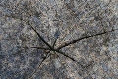 Textura de madera/fondo de madera de la textura Foto de archivo libre de regalías