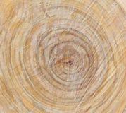Textura de madera Fondo de madera Detalle en el árbol Fondo del árbol Fotografía de archivo libre de regalías