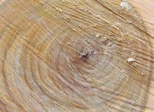 Textura de madera Fondo de madera Detalle en el árbol Fondo del árbol Imagenes de archivo