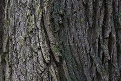 Textura de madera Fondo de madera Detalle en el árbol Fondo del árbol Imágenes de archivo libres de regalías