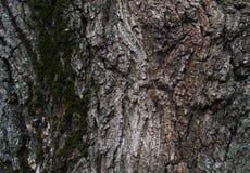 Textura de madera Fondo de madera Detalle en el árbol Fondo del árbol Fotografía de archivo