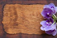 Textura de madera Fondo de madera Un pequeño botón miente en un tablero de madera En el bosque Teñido caliente Fotos de archivo