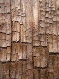 Textura de madera fresca de la corteza de Grunge foto de archivo libre de regalías
