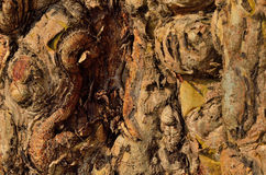 Textura de madera Gnarly Imagen de archivo