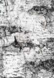 Textura de madera - grano de madera Imagen de archivo libre de regalías
