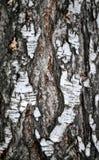 Textura de madera hermosa Fotos de archivo