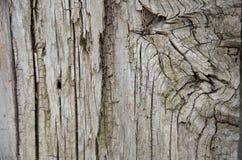 Textura de madera de la corteza Imagen de archivo libre de regalías