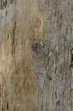 Textura de madera de la corteza Imagen de archivo